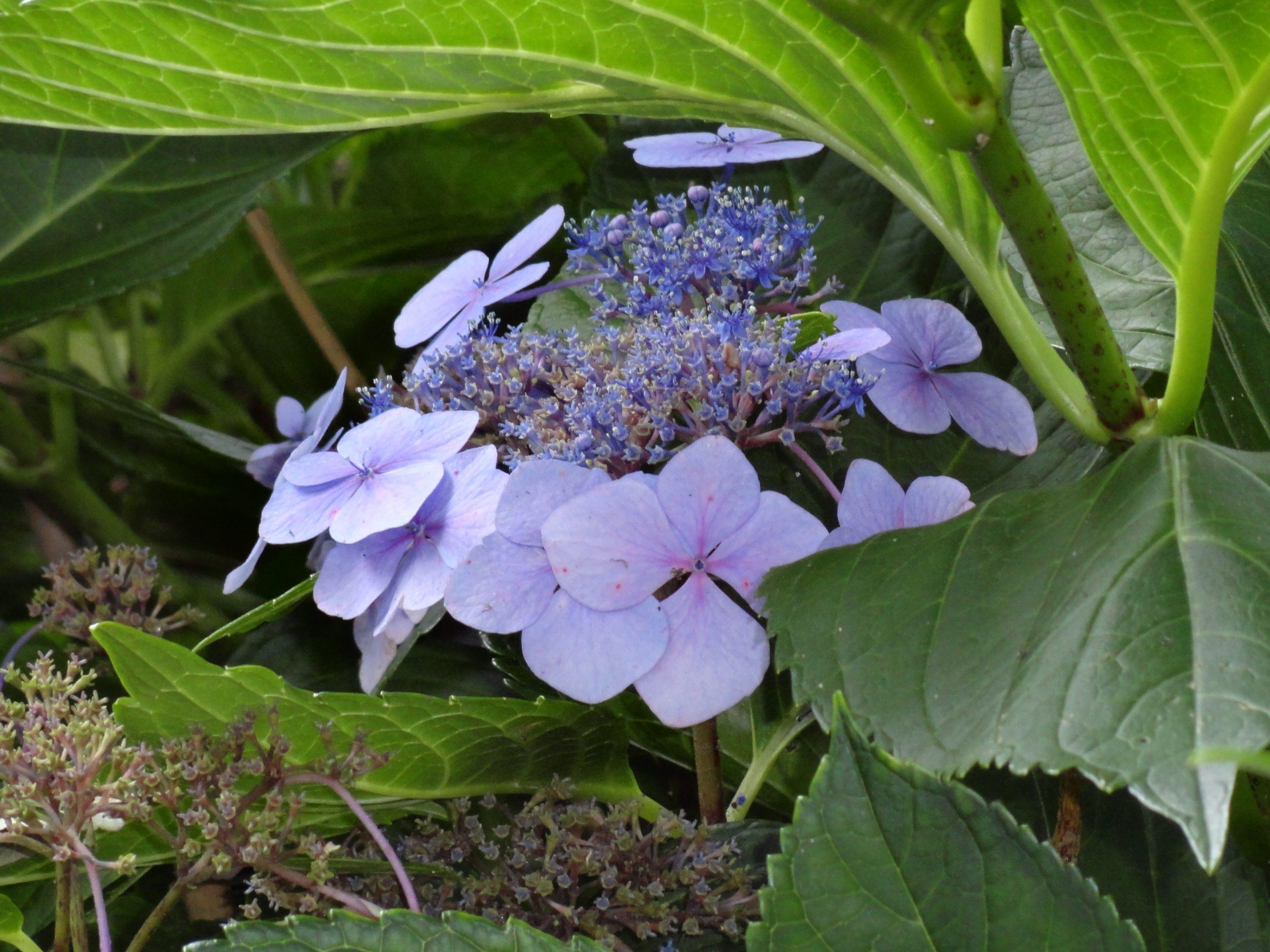 Kwiat-fioletowy
